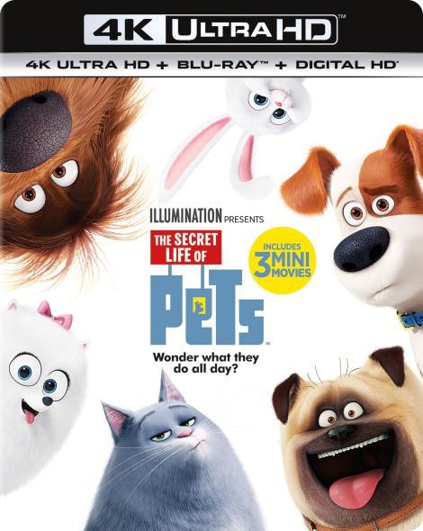 the-secret-life-of-pets-4k-ultra-hd-cover