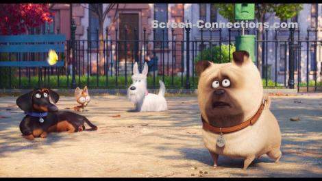 the-secret-life-of-pets-2d-blu-ray-image-06